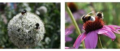 Jardiland se mobilise lors de la semaine des abeilles du 13 au 21 juin 2020
