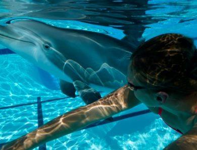Un dauphin animatronique plus vrai que nature : ses créateurs reçoivent un prix de l'innovation
