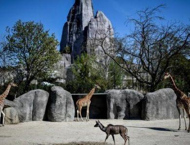 Du nouveau pour la réouverture du Parc Zoologique de Paris